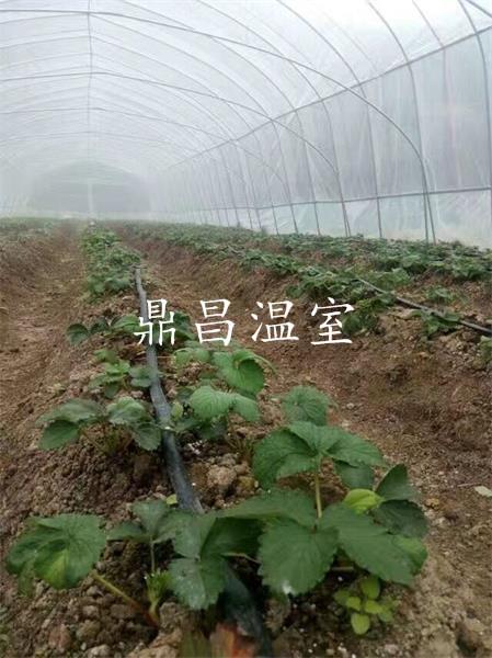 龙泉草莓基地