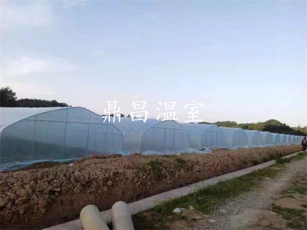 利川南坪蔬菜基地