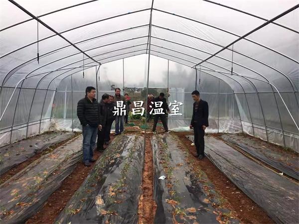如何调节温室大棚的湿度